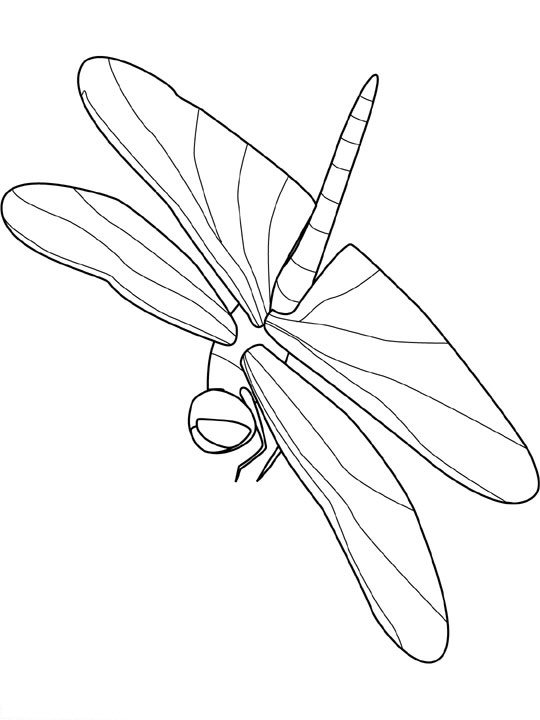 insekten malvorlagen  malvorlagen1001de