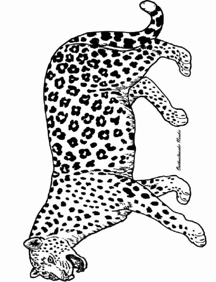 panther malvorlagen  malvorlagen1001de