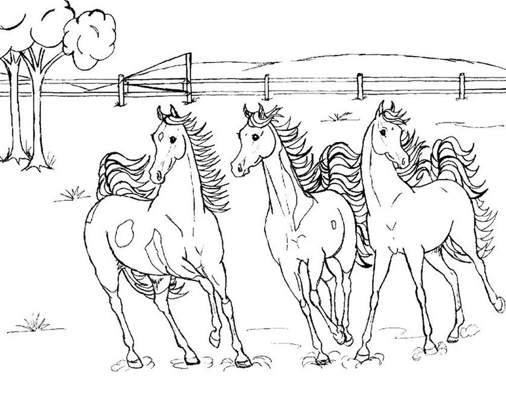 Pferde Malvorlagen - Malvorlagen1001.de