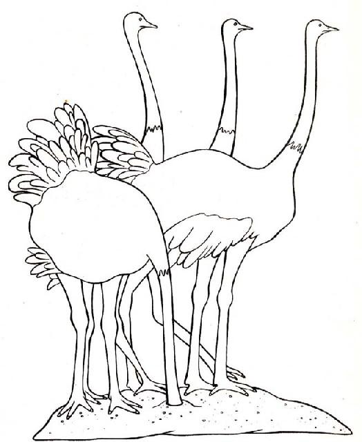 vogel malvorlagen  malvorlagen1001de