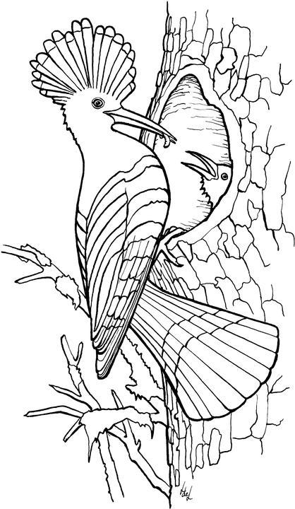 ausmalbilder vogel im vogelhaus  tippsvorlage
